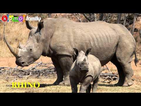 Tiếng Anh - Dạy bé học tên con vật bằng hình ảnh - Phần 3 - LEARN ANIMALS PART 3 - kidmolfamily