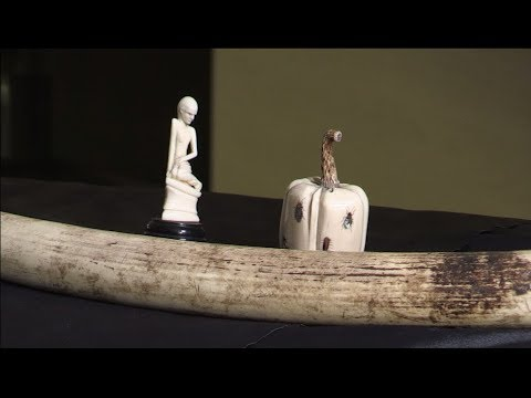 Will Travers OBE interview on the ivory trade