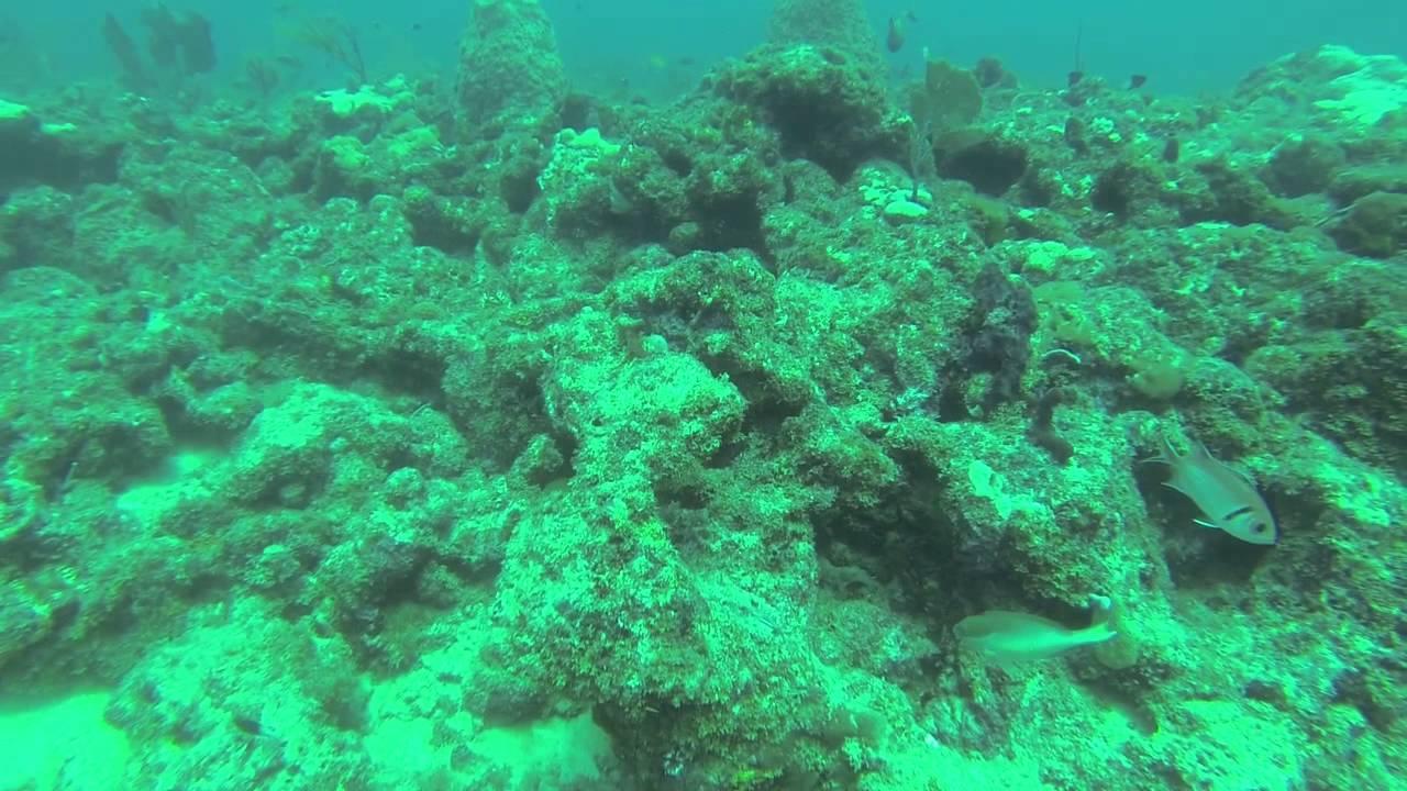 Scuba Diving 5-11-13 West Palm Beach Florida