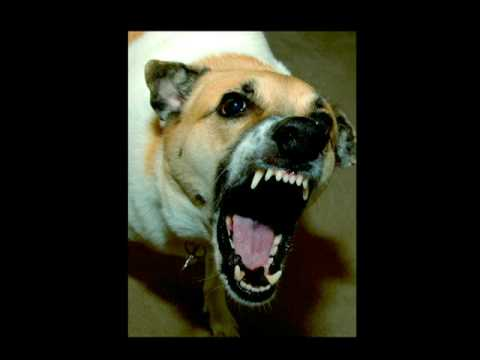 Stop My Dog Barking How To Stop A Barking Dog Part One