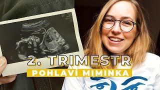 2. TRIMESTR | Nicole | Pohyby miminka a co čekáme za pohlaví?