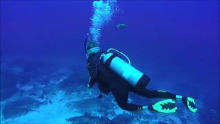Shark Diving (Hammerheads) - MC Hammer