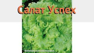Салат обыкновенный Успех Листовой (uspekh) 🌿 обзор: как сажать, семена салата Успех Листовой