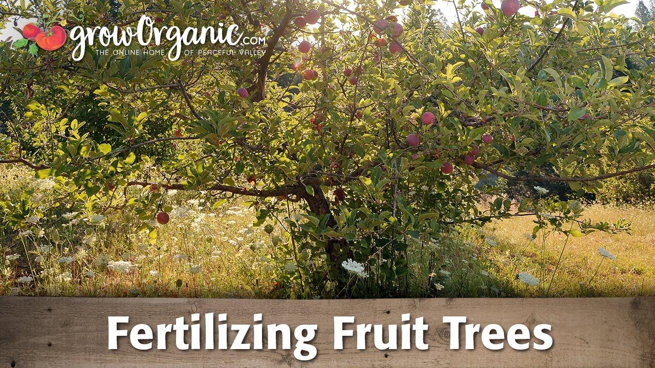 advice for fertilizing bare root fruit trees