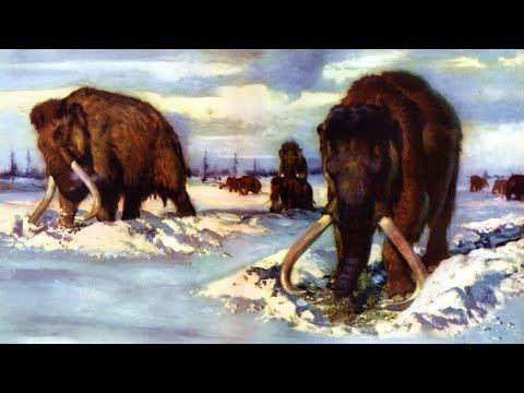 Мамонты (рассказывает палеонтолог Ярослав Попов)