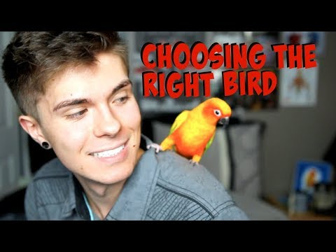 How to Find the Right Bird for You! - Best Beginner Birds