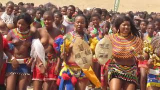 Video The Annual Zulu Reed Dance download MP3, 3GP, MP4, WEBM, AVI, FLV Juni 2018