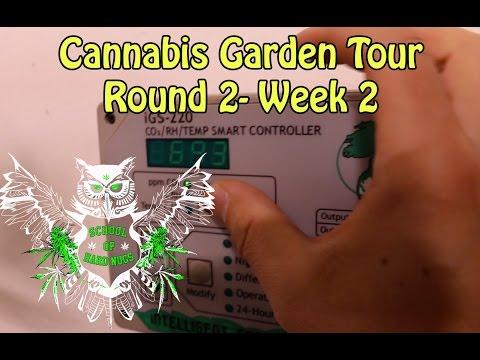 Cannabis Garden Tour, Round 2 - Week2 | Room Temperature | CO2  | Humidity