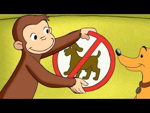 Jorge el Curioso en Español 🐵Confusión de Letreros 🐵Mono Jorge🐵Caricaturas para Niños