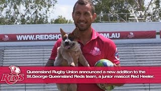St.George Queensland Reds introduce new junior mascot