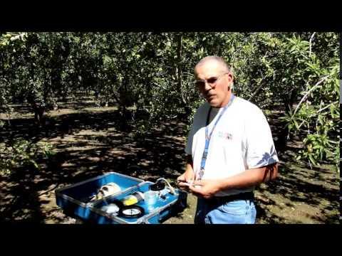 Measuring Stem Water Potential in Almond