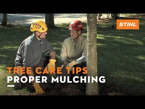 Tree Care Tips: Proper Mulching
