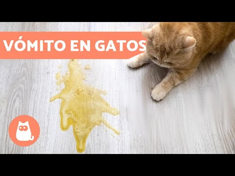 porque los gatos vomitan blanco