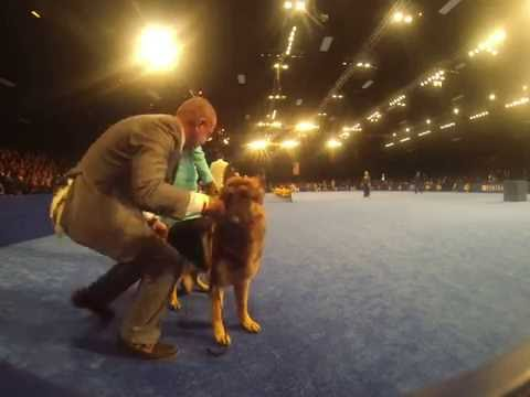 The National Dog Show (2016) - Herding Dogs Preview