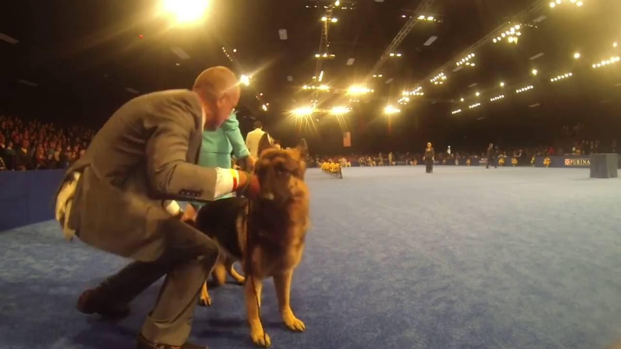 National Dog Show List Of Breeds