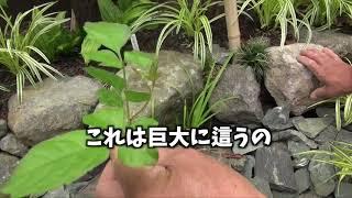 プロが教える雑草処理の基本3