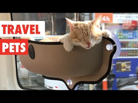 Travel Pets | Funny Pet Videos Compilation 2017