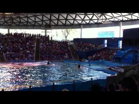 Texas Travel Travel Destinations & Attractions   Visit Seaworld San Diego dolphin Show