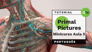 DOTLIB - Primal Pictures - Mini Curso (Aula 5)