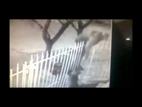Aprovecharon el paso del tren y se robaron una cachorra de un casa