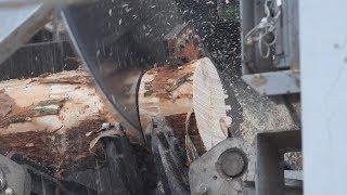 Drewno prosto z lasu