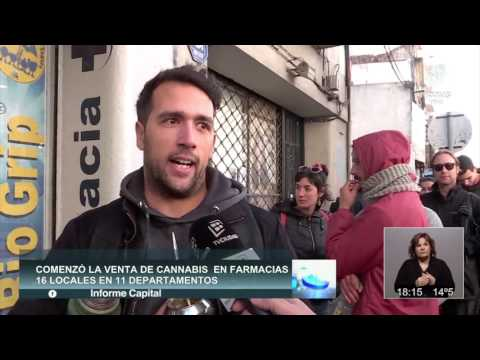 MARIHUANA LEGAL en Uruguay, móvil para INFORME CAPITAL