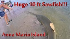 HUGE 10 ft SAWFISH Caught on Anna Maria Island, Florida AMAZING AND RARE CATCH!!!