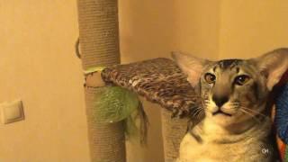 Адские песни котов