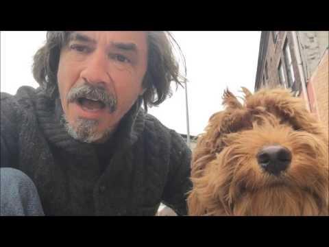 E Collar preferred by Service Dog Trainers : E Collar Technologies Mini Educator