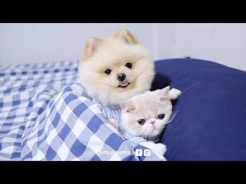Dog take care the cat : หมาเลี้ยงแมว