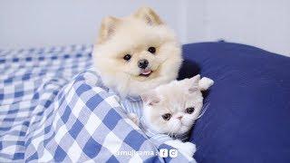 Muji looks after Mumaru: หมาเลี้ยงแมว