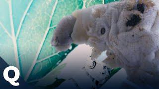 Baixar Darum könnte Seide eine gute Alternative zu Plastik sein | Quarks
