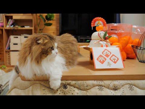床暖房でぬくぬく暮らす令和の長毛猫。初めてのこたつを楽しむ