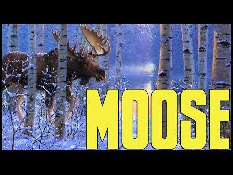 The Hunter Diaries - Moose
