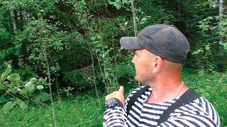 Тайны леса. Что скрывает лес?  👀