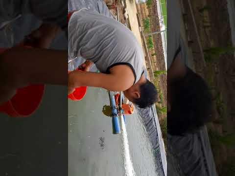 khu nuôi cá chạch  lấu  công nghệ  cao
