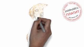 Нарисованные карандашом собаки   Как нарисовать поэтапно добрую ушастую собаку