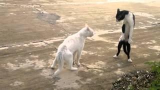 Кот встал на задние лапы=)