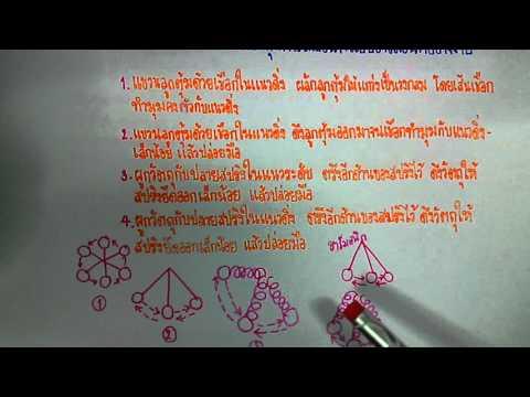 เฉลยข้อสอบโอเน็ตวิทยาศาสตร์ ปี52 ข้อ55