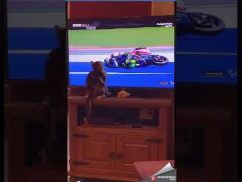 For cats that hate watching GP bike racing! A must see!