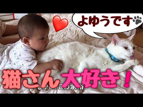 赤ちゃんに優しすぎる神猫 Cat's tooooo sweet