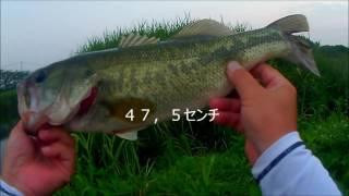 まずまずデカイんが出た~九州おかっぱりバス釣り(グリーンフィッシュ) thumbnail