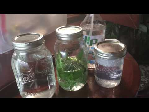 Cannabis Tissue Culture With Ghost: Episode 2