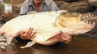 Top 10 monstruos de rio más aterradores.