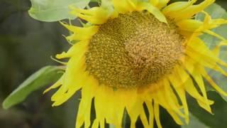 Релакс видео. HD Музыка для души. Красивые фото природы. Relax Music