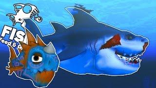 MỐI THÙ CÁ MẬP TRẮNG!!!| Feed and Grow: FISH [18]