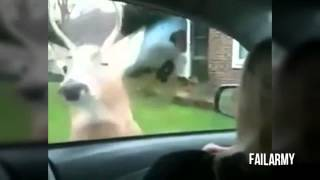 the attack on the animal humor, clip hot funny