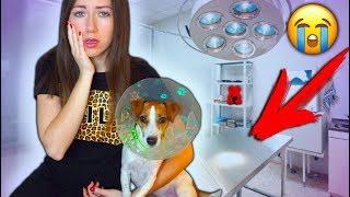 ТАЙНАЯ БОЛЕЗНЬ моей Собаки Моя История Джина болеет аллергия | Elli Di Pets