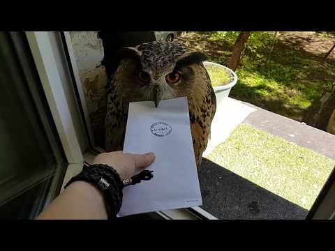 This Real-Life Owl Delivers Mail Like It's in HARRY POTTER