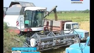 Фермеры Дагестана вышли на уборку риса